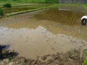 田植えの写真
