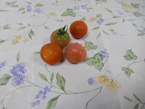 収穫されたミニトマトの写真